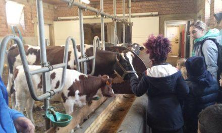 Voorjaarkriebels in het Rivierenhof zorgen voor nieuw leven