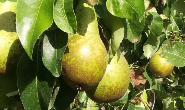 Dames en heren, appelen en peren