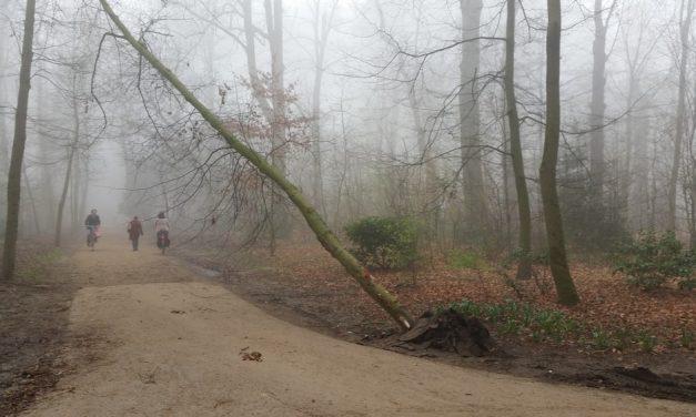 Auto rijdt tegen een boom in het park