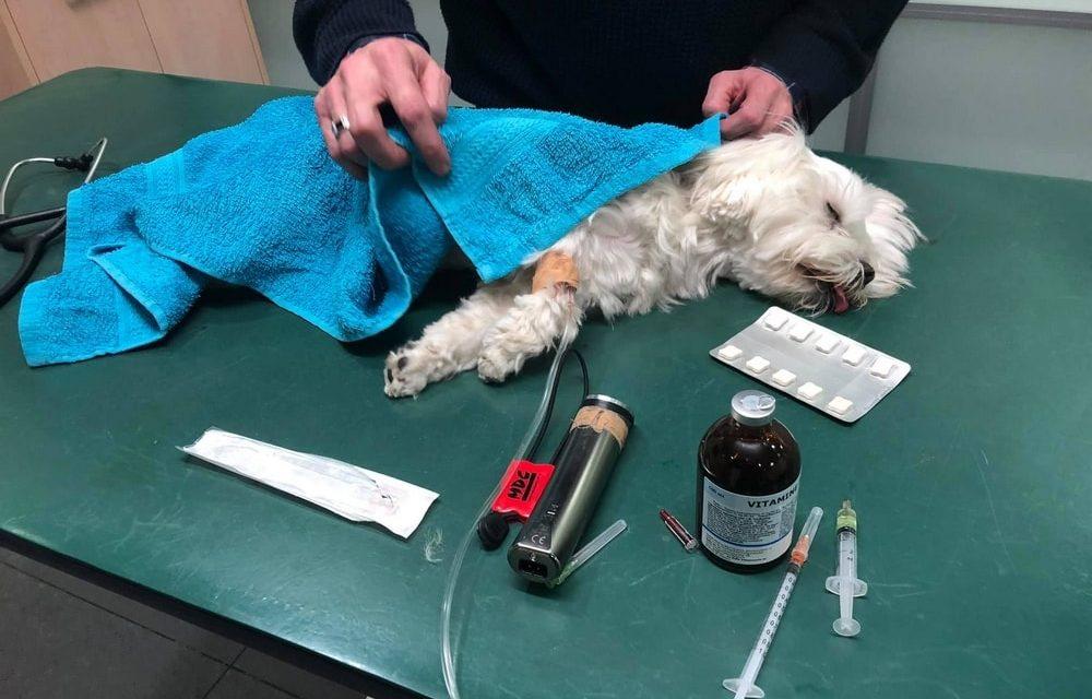 Hondje vergiftigd in het Rivierenhof