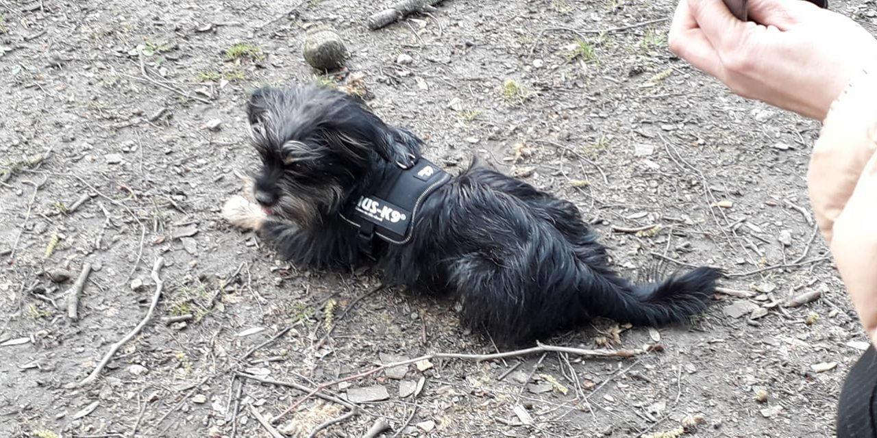 Gestolen hondje is vermoedelijk in Deurne