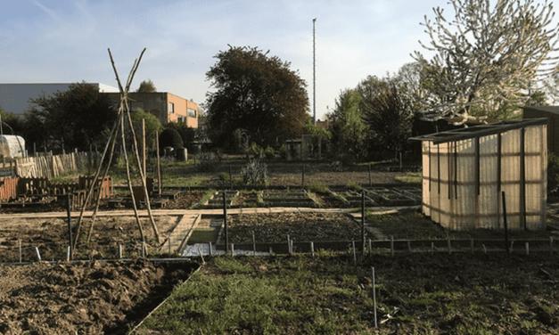 School Drakenhof stelt vernieuwde schooltuin voor