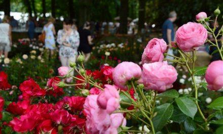 Rozenfeest & Dagje Deurne luiden fleurige zomer in