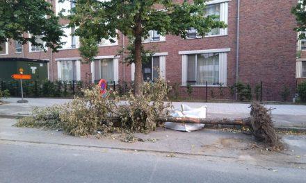 Zoek de reden waarom deze jonge boom moest verdwijnen
