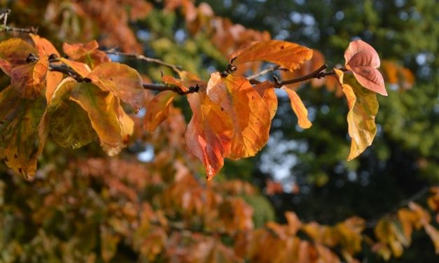 Bijzondere bomen en zaden