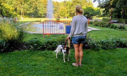 Nieuwe fontein in het te Boelaarpark