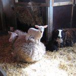 Kinderboerderij Rivierenhof is ontwaakt uit haar winterslaap