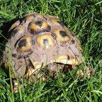 In memoriam voor een schildpad