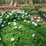 Gegidste wandeling 'lente in het Rivierenhof'