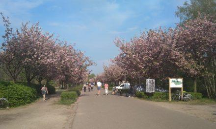 Deurne krijgt twee kilometer fietsstraat