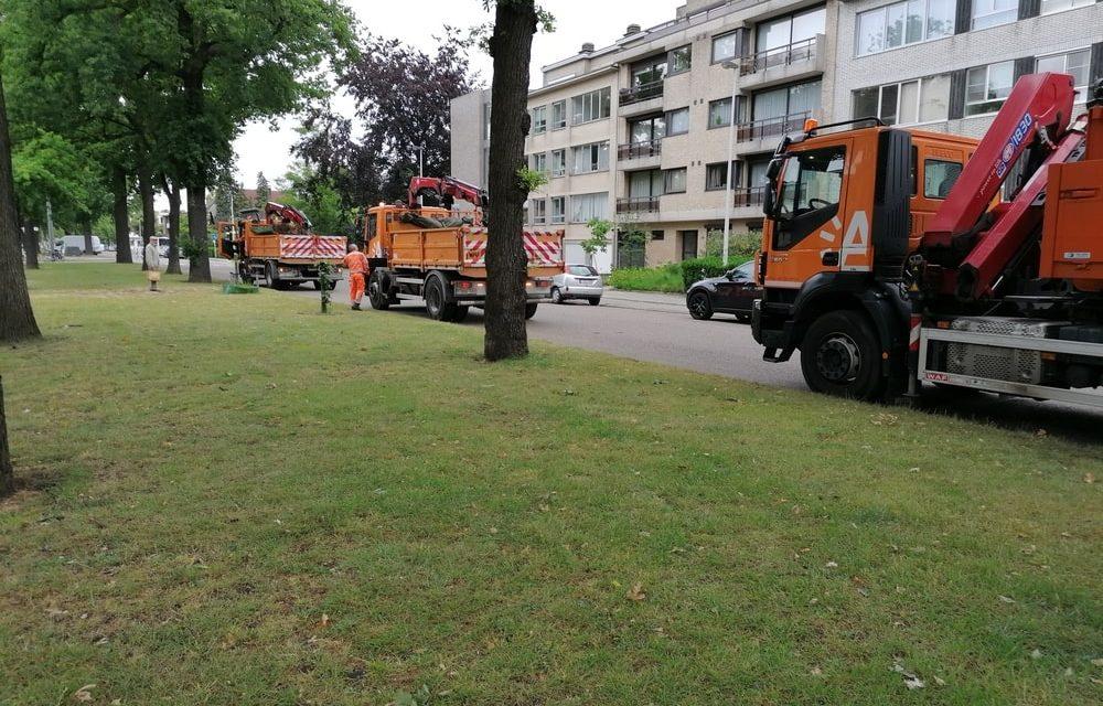 Drie eikenboompjes zijn verwijderd