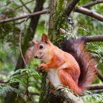 Zomerzoektocht 'in het spoor van de eekhoorn'