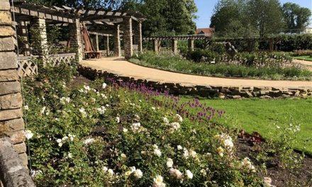 Vernieuwde helft Rozentuin Rivierenhof is open
