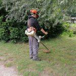 Rivierenhof gaat het gevecht aan tegen de Japanse duizendknoop