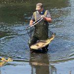 Droogte, vissen en waterlelies
