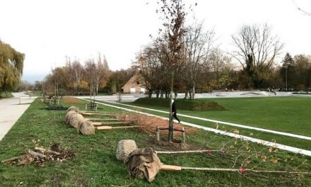 Nieuwe bomen voor Park Groot Schijn