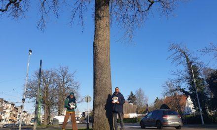 Stop de keerlus, spaar de bomen