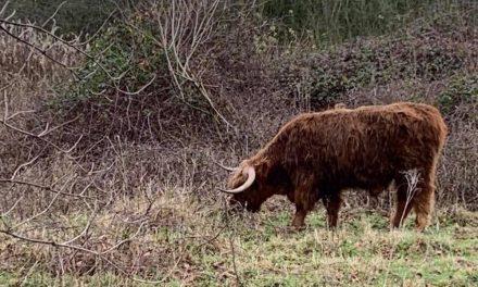 Twee wandelingen tonen de natuur van Deurne