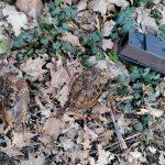 Dode houtsnippen in het park