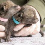 Jonge vosjes gevonden
