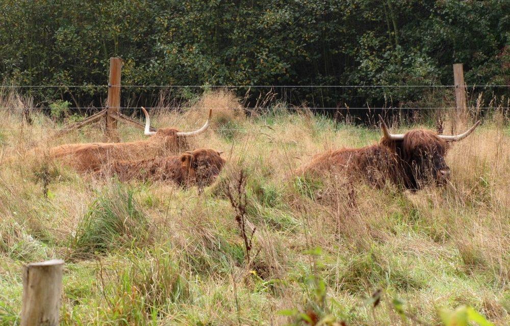 Beschermd landschap Ertbrugge viert feest